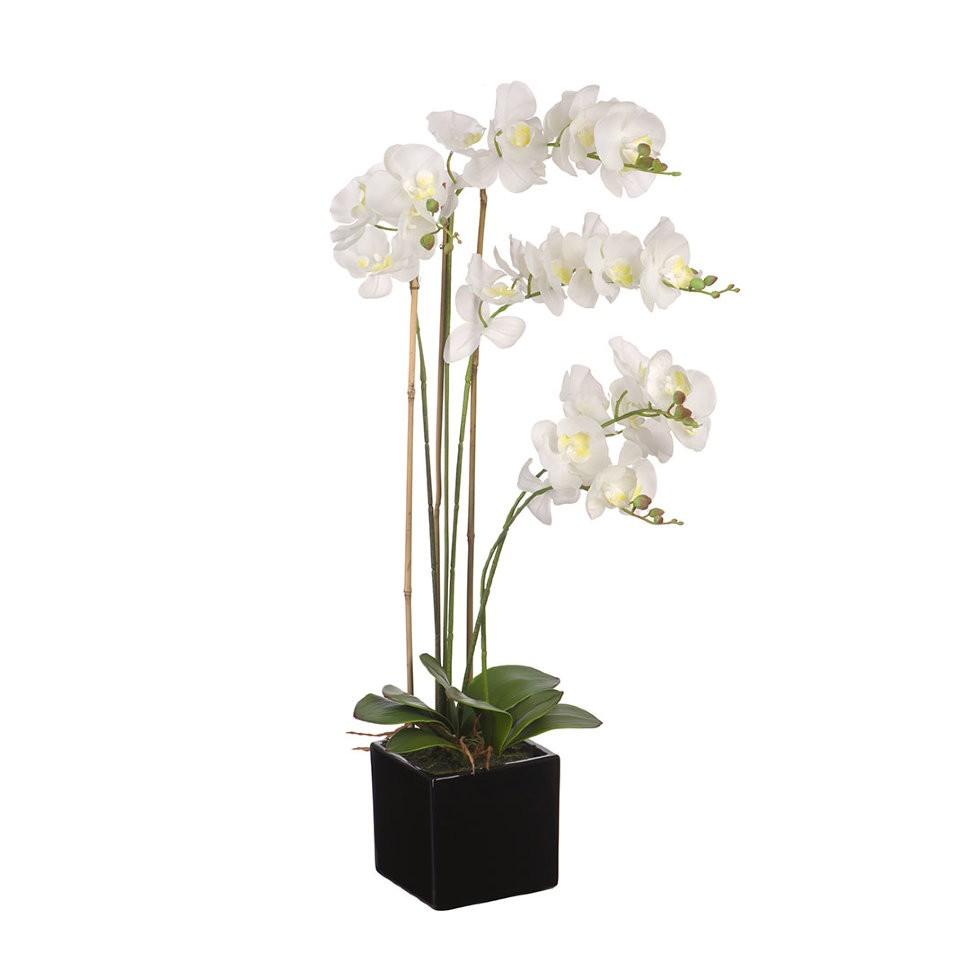 вазон орхидея картинки анимированные открытки друзьям