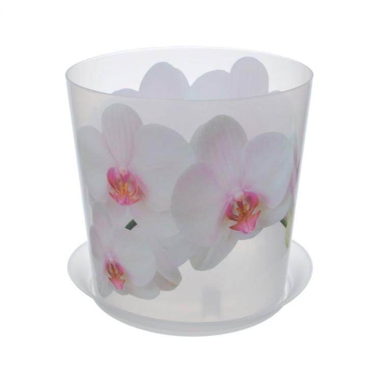 вазон орхидея картинки если
