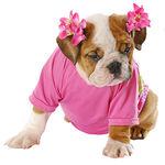 Гигиена для животных | интернет-магазин TOPSTO